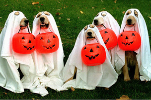 Happy Halloween, Your local Barks and Bubbles Mobile groomer!
